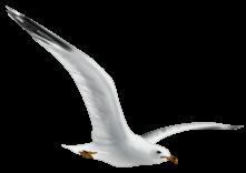 Il gabbiano vola