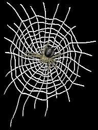 Prigione di tela e ragno