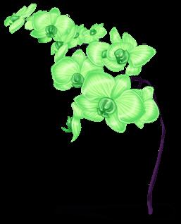Fiore Di Neve
