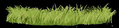 Lion Grass