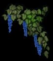 Fiore Elfo