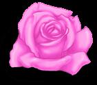 San Valentino rosa
