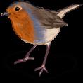Uccello di primavera