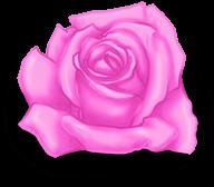 Grande rosa di San Valentino