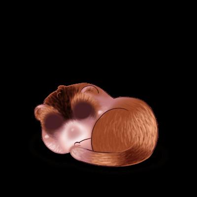 Adotta un Furetto Cioccolato