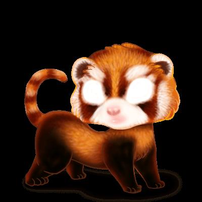 Adotta un Furetto Panda Roux