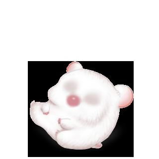 Adotta un Criceto Bianco