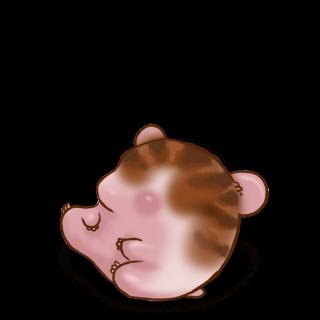 Adotta un Criceto Marrone a strisce