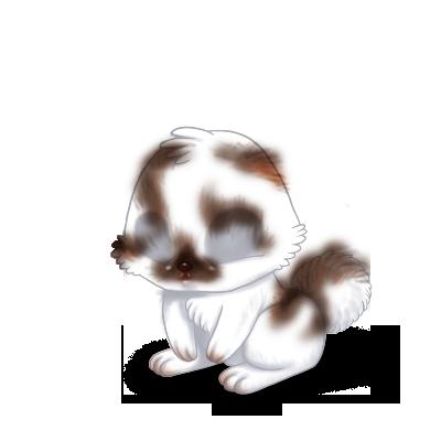 Adotta un Coniglio Marrone e bianco