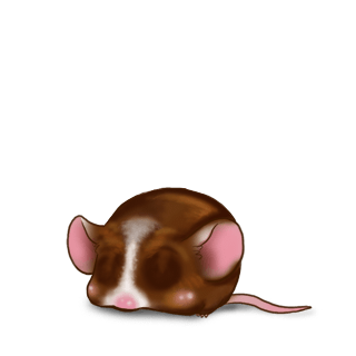 Mouse Chocolat au lait