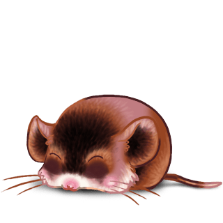 Adotta un Mouse Cromimi