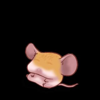Adotta un Mouse Albicocca classica