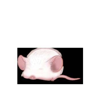 Adotta un Mouse Castagno