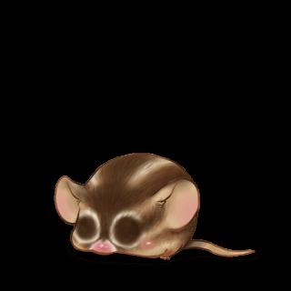 Adotta un Mouse Scoiattolo
