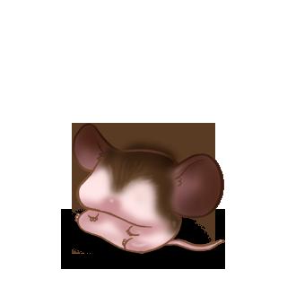 Adotta un Mouse Gufo
