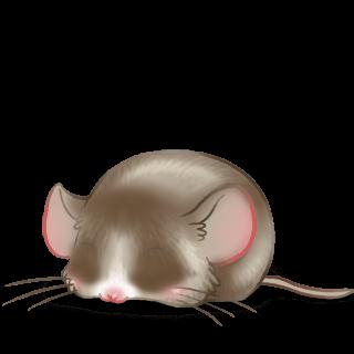 Adotta un Mouse Pralina
