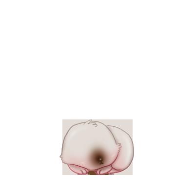 Adotta un Coniglio Bianco e Grigio