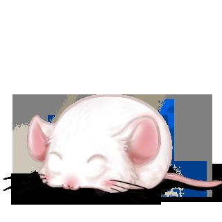 Adotta un Mouse Albino