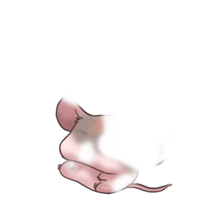 Adotta un Mouse Piccante