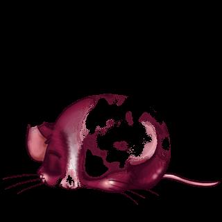 Adotta un Mouse Primavera