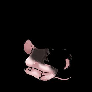 Adotta un Mouse Cacatua