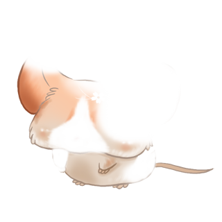 Adotta un Mouse Shiba Inu