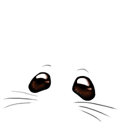 Adotta un Mouse Angora albicocca